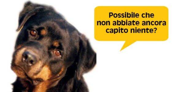 Ci risiamo: al Grand Prix di Zagabria l'Italia è assente
