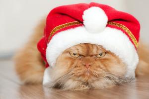 garfi-gatto